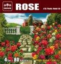 ダイオパーク[DP35011]1/35 薔薇セット(80株入り)