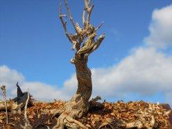 画像1: 彩葉[MS-021]古木の幹(天然素材)
