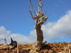 画像2: 彩葉[MS-021]古木の幹(天然素材)