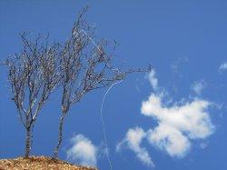 画像1: 彩葉[MS-022]若木の幹(天然素材)