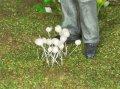 彩葉[MS-007]白い小さな花セット(天然素材)