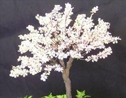 画像1: 紙創り[A-27]桜