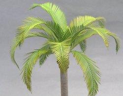 画像1: 紙創り[A-31]ココヤシの葉