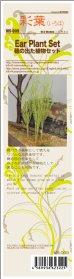 画像4: 彩葉[MS-009]穂の出た植物セット (4)