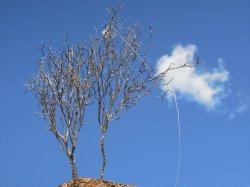 画像2: 彩葉[MS-022]若木の幹(天然素材)