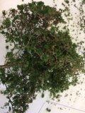JOEFIX[JF191-6]ジオラマ素材 暗緑色の茂み(茂み用素材)