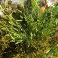 JOEFIX[JF191-8]ジオラマ素材 小さな緑色系の小枝4