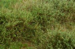 画像4: マーティンウェルバーグ[WB-M042]マットタイプ(ヤブ) 全高2mm~30mm 夏 パウダー付き  21cmx30cm