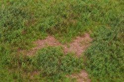 画像3: マーティンウェルバーグ[WB-M052]マットタイプ(草原) 全高2mm~12mm 夏 パウダー付き  21cmx30cm