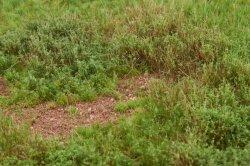 画像4: マーティンウェルバーグ[WB-M052]マットタイプ(草原) 全高2mm~12mm 夏 パウダー付き  21cmx30cm