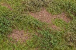 画像3: マーティンウェルバーグ[WB-M053]マットタイプ(草原) 全高2mm~12mm 晩夏 パウダー付き  21cmx30cm