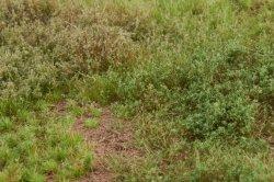 画像4: マーティンウェルバーグ[WB-M053]マットタイプ(草原) 全高2mm~12mm 晩夏 パウダー付き  21cmx30cm