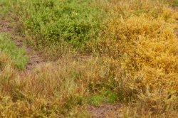 画像4: マーティンウェルバーグ[WB-M054]マットタイプ(草原) 全高2mm~12mm 初秋 パウダー付き  21cmx30cm