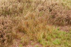 画像4: マーティンウェルバーグ[WB-M057]マットタイプ(草原) 全高2mm~12mm 冬 パウダー付き  21cmx30cm