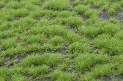 画像3: マーティンウェルバーグ[WB-P201]草地 春 全高2mm