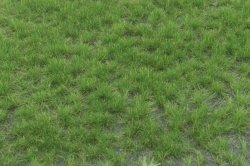 画像2: マーティンウェルバーグ[WB-P402]草地 夏 全高4.5mm