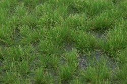 画像3: マーティンウェルバーグ[WB-P402]草地 夏 全高4.5mm