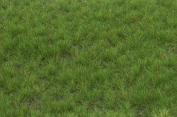 画像2: マーティンウェルバーグ[WB-P602]草地 夏 全高6mm