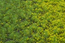 画像3: マーティンウェルバーグ[WB-PW201]草地(パウダー付き) 春 全高2mm