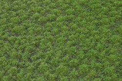 画像2: マーティンウェルバーグ[WB-PW202]草地(パウダー付き) 夏 全高2mm
