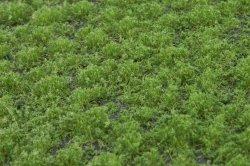 画像3: マーティンウェルバーグ[WB-PW202]草地(パウダー付き) 夏 全高2mm