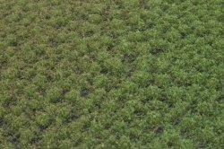 画像2: マーティンウェルバーグ[WB-PW203]草地(パウダー付き) 晩夏 全高2mm
