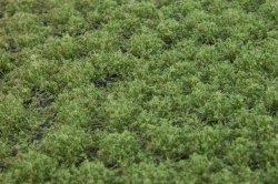 画像3: マーティンウェルバーグ[WB-PW203]草地(パウダー付き) 晩夏 全高2mm