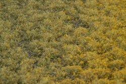 画像3: マーティンウェルバーグ[WB-PW204]草地(パウダー付き) 初秋 全高2mm
