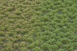 画像2: マーティンウェルバーグ[WB-PW403]草地(パウダー付き) 晩夏 全高4.5mm