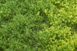 画像3: マーティンウェルバーグ[WB-PW601]草地(パウダー付き) 春 全高6mm