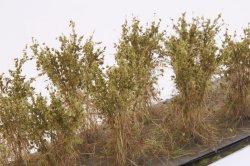 画像3: マーティンウェルバーグ[WB-SBOL]茂みB 株タイプ 全高40mm オリーブグリーン 10株