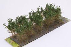画像2: マーティンウェルバーグ[WB-SCDG]茂みC 株タイプ 全高40mm ダークグリーン 10株