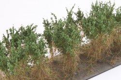 画像3: マーティンウェルバーグ[WB-SCDG]茂みC 株タイプ 全高40mm ダークグリーン 10株