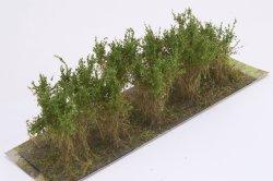 画像2: マーティンウェルバーグ[WB-SCMG]茂みC 株タイプ 全高40mm ミディアムグリーン 10株