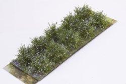 画像2: マーティンウェルバーグ[WB-SDL]茂みD 株タイプ 全高20mm ラベンダー 10株