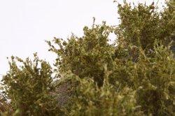 画像4: マーティンウェルバーグ[WB-SDOL]茂みD 株タイプ 全高20mm オリーブグリーン 10株