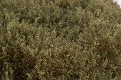 画像4: マーティンウェルバーグ[WB-SEBG]茂みE 草むらタイプ 全高20mm バーンドグリーン