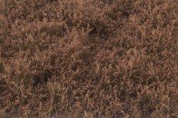 画像3: マーティンウェルバーグ[WB-SEFB]茂みE 草むらタイプ 全高20mm フォールブラウン