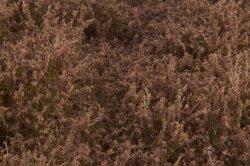 画像4: マーティンウェルバーグ[WB-SEFB]茂みE 草むらタイプ 全高20mm フォールブラウン