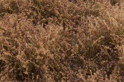 画像4: マーティンウェルバーグ[WB-SELB]茂みE 草むらタイプ 全高20mm ライトブラウン