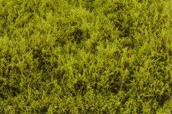 画像3: マーティンウェルバーグ[WB-SELG]茂みE 草むらタイプ 全高20mm ライトグリーン