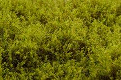 画像4: マーティンウェルバーグ[WB-SELG]茂みE 草むらタイプ 全高20mm ライトグリーン