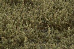 画像4: マーティンウェルバーグ[WB-SFBG]茂みF 草むらタイプ 全高15mm バーンドグリーン