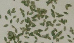 画像1: Reality in Scale[L3005]雑木の葉 グリーン