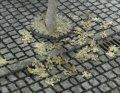 紙創り[B-4]枯葉メープル(茶)