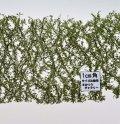 ミニネイチャー[913-12]ポプラの枝葉(N)-夏の盛り