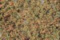 ミニネイチャー[920-13]ブナの枝葉(N)‐秋の訪れ